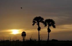 Sylwetki cukrowa palma Zdjęcia Stock