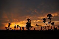 Sylwetki cukrowa palma Zdjęcie Royalty Free
