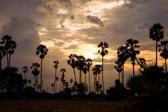 Sylwetki cukrowy drzewko palmowe przy zmierzchem Fotografia Stock
