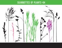 Sylwetki części rośliny, liście, kwiaty, wektorowa ilustracja zdjęcie royalty free