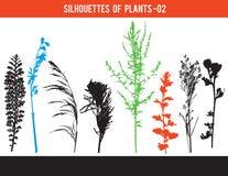 Sylwetki części rośliny, liście, kwiaty, wektorowa ilustracja obrazy royalty free