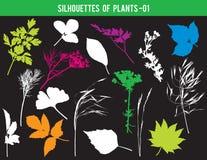 Sylwetki części rośliny, liście, kwiaty, wektorowa ilustracja zdjęcie stock