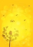 Sylwetki dandelion z ziarnami na tle Zdjęcia Stock
