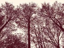 Sylwetki deciduous drzewa w jesień lesie Zdjęcia Royalty Free