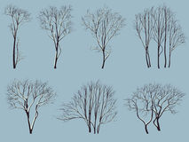 Sylwetki drzewa bez liści z śniegiem. Obrazy Royalty Free