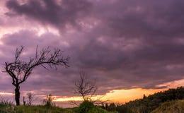 Sylwetki drzewa przeciw dramatycznemu wschodowi słońca Fotografia Royalty Free