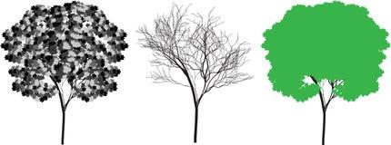 sylwetki drzewa wektor Obraz Royalty Free