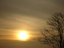 Sylwetki drzewa zmierzch Obraz Stock