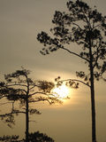 Sylwetki drzewa zmierzch Fotografia Stock