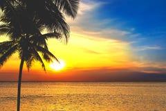 Sylwetki drzewka palmowe i piękny morze podczas zmierzchu w Tajlandia, Phuket obrazy stock