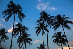 Sylwetki drzewka palmowe na niebieskim niebie Zdjęcia Royalty Free