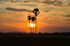 Sylwetki drzewka palmowe przeciw niebu Obraz Stock