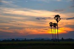 Sylwetki drzewka palmowe przeciw niebu Obraz Royalty Free