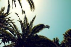 Sylwetki drzewka palmowe przeciw niebu podczas tropikalnego dnia Obraz Stock