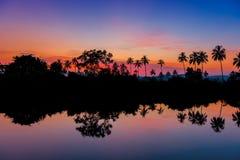 Sylwetki drzewka palmowe przy świtem blisko jeziora Obraz Stock