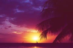 Sylwetki drzewka palmowego żaglówek zmierzch blaknący filtr Fotografia Stock