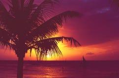 Sylwetki drzewka palmowego żaglówek zmierzch blaknący filtr Obrazy Royalty Free