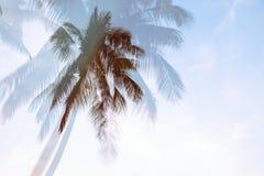 Sylwetki drzewko palmowe z dwoistego ujawnienia skutkiem w rocznika filtra tle zdjęcia stock