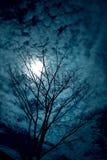 sylwetki drzewne Obrazy Royalty Free