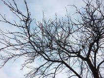 Sylwetki drzewo Obrazy Stock