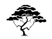 sylwetki drzewo Zdjęcia Stock
