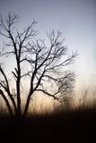 sylwetki drzewo Zdjęcie Royalty Free
