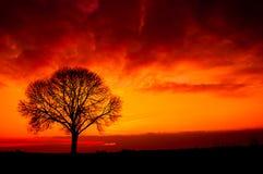 sylwetki drzewo Obraz Stock