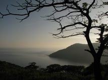 sylwetki drzewo Zdjęcia Royalty Free