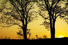 sylwetki drzewo Obraz Royalty Free