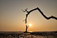 Sylwetki drzewo Fotografia Stock