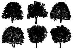 sylwetki drzewo Obrazy Royalty Free