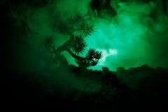 Sylwetki drzewo na księżyc w pełni tle Księżyc w pełni wydźwignięcie nad japońskiego stylu drzewo przeciw stonowanemu mgłowemu ni Zdjęcia Royalty Free