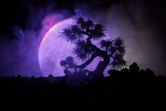 Sylwetki drzewo na księżyc w pełni tle Księżyc w pełni wydźwignięcie nad japońskiego stylu drzewo przeciw stonowanemu mgłowemu ni Fotografia Royalty Free