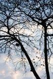 Sylwetki drzewo na niebo selekcyjnej ostrości Obraz Stock