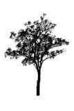 Sylwetki drzewo odizolowywa na bielu Obraz Royalty Free