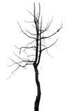Sylwetki drzewo pojedynczy Obraz Royalty Free