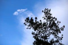 Sylwetki drzewo z niebieskim niebem Obrazy Royalty Free