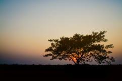 Sylwetki drzewo z zmierzchu koloru żółtego niebem Zdjęcia Royalty Free