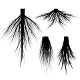 Sylwetki drzewo Zakorzenia wektoru set Obrazy Stock