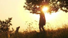 Sylwetki dziewczyny bawić się z jej ślicznym psem podczas zadziwiającego zmierzchu i szkolenie zdjęcie wideo