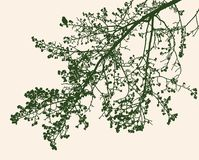 Sylwetki gałąź lipowy drzewo w wiośnie ilustracji