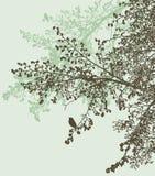 Sylwetki gałąź lipowy drzewo w wiosna lesie ilustracja wektor