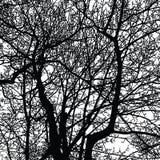 Sylwetki gałąź w zimie Fotografia Royalty Free