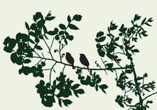 Sylwetki gałąź z ptakami w lecie royalty ilustracja