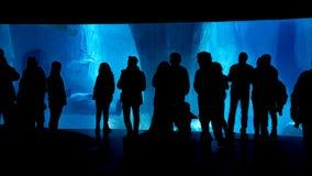 Sylwetki grupa ludzi patrzeje podwodnego błękitnego akwarium z skałami Zdjęcia Royalty Free