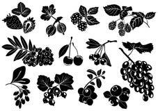 Sylwetki jagody z liśćmi na białym tle Set wektor Obrazy Royalty Free