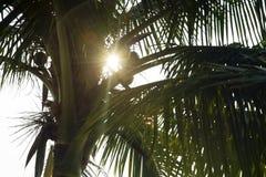 sylwetki kokosowego drzewa liście, dzień Obrazy Royalty Free