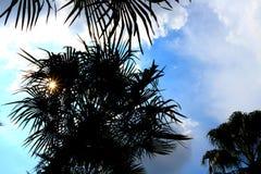 Sylwetki kokosowy drzewo z niebieskim niebem Fotografia Royalty Free