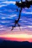 Sylwetki krajobrazowa góra z drzewem przy zmierzchem Obrazy Royalty Free
