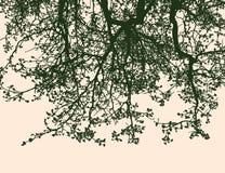 Sylwetki kwiecenie gałąź lipowy drzewo ilustracja wektor